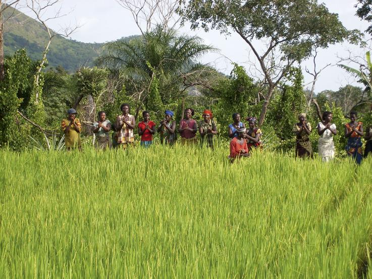 Collibri Foundation steunt rijstboeren in Benin.