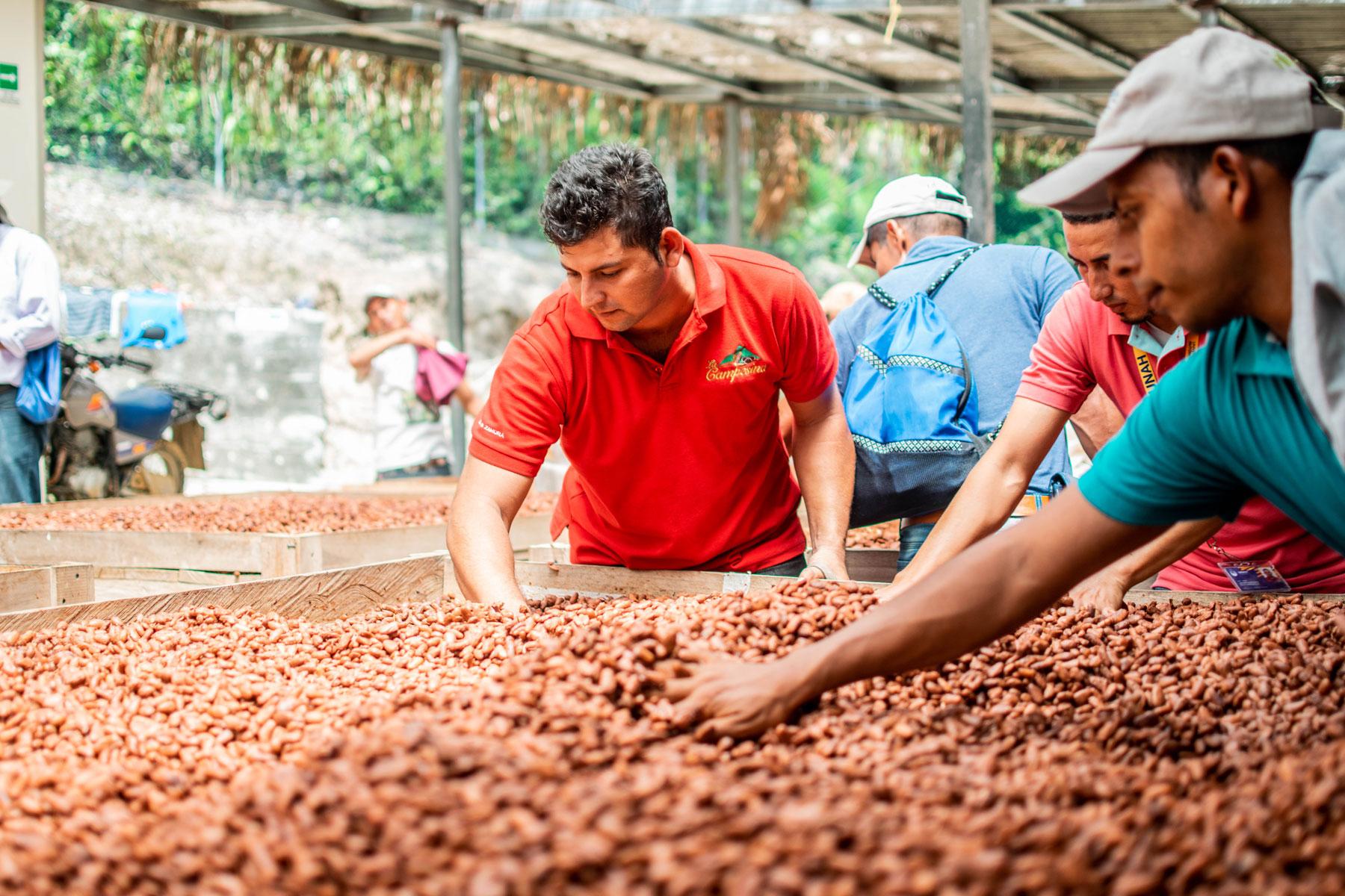 Après leur formation au Honduras, les jeunes transmettent leurs connaissances au sein de leur communauté. Le projet a ainsi déjà pu venir en aide à plus de 200producteurs de cacao.