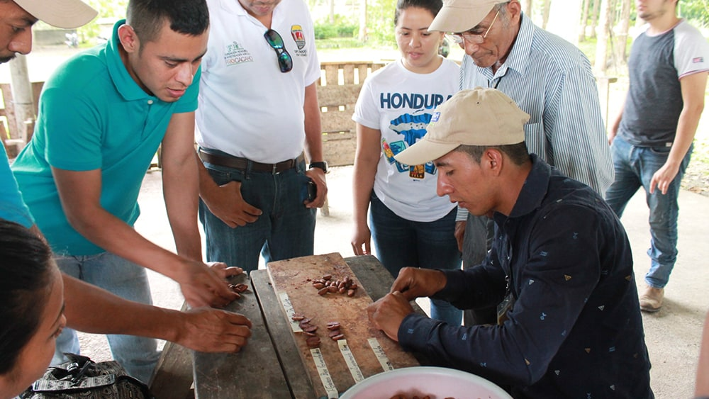 Lázaro learns to grow cocoa the sustainable way.