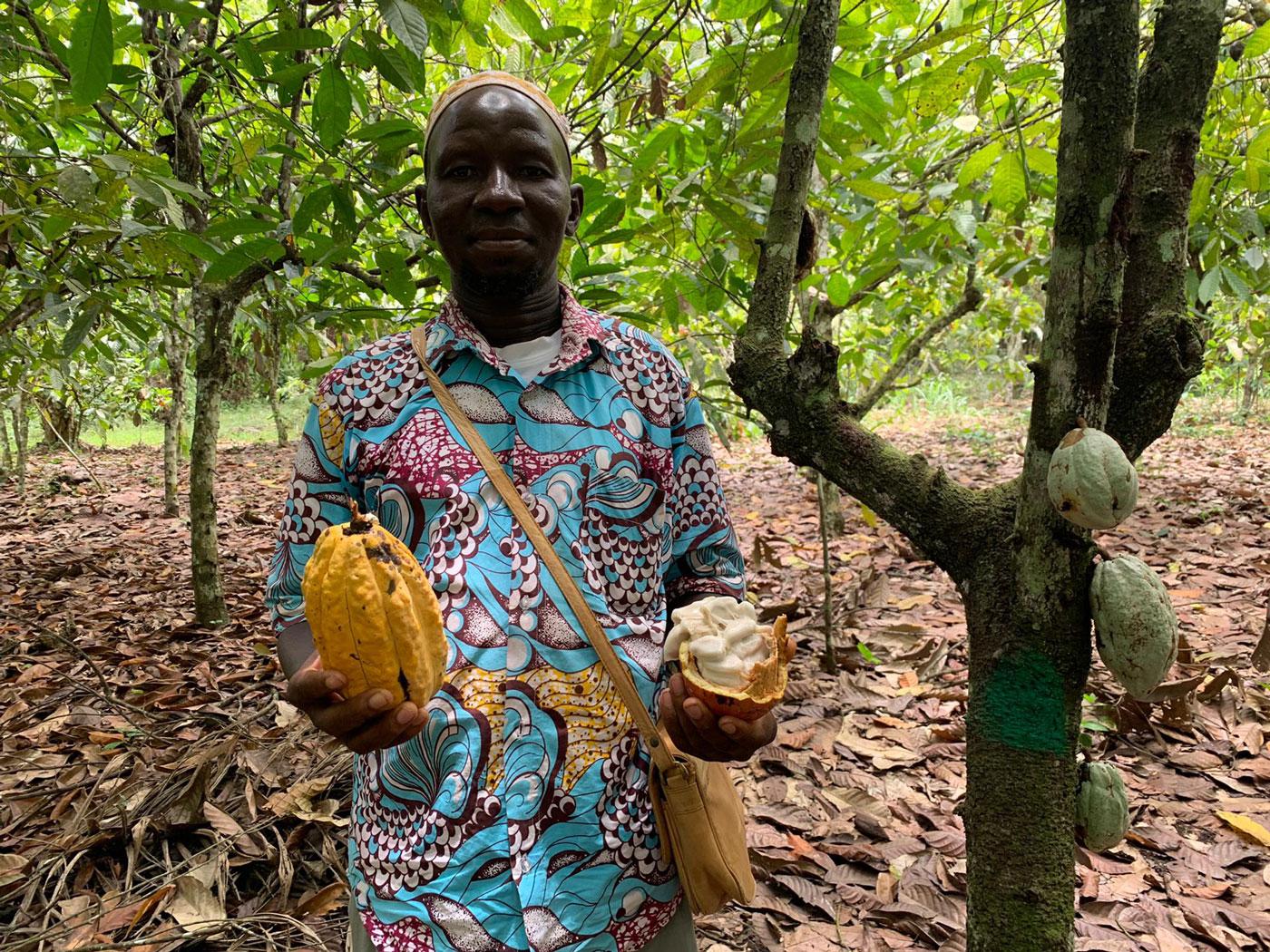 Een man met een hele cacaovrucht in de ene hand, en een opengesneden exemplaar in de andere.
