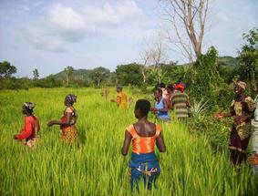 Dankzij Collibri Foundation vinden jongeren uit Benin werk in de rijstsector.